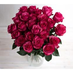 Букет 25 роз Лола (Эквадор 40 см)