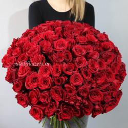 Букет 101 красная роза Эксплорер (Эквадор 60 см)