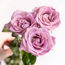 Роза кустовая A-Ledy
