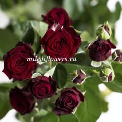 Роза кустовая Angelique