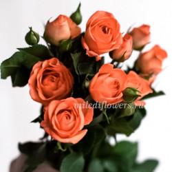 Роза кустовая Baby