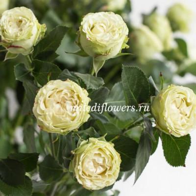 Роза кустовая Bamboo