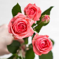 Роза кустовая Barbados