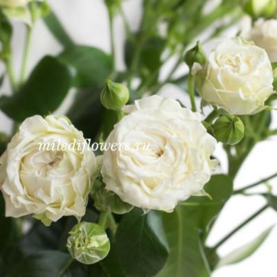 Роза кустовая Bridal Flow