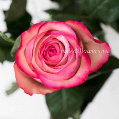 Роза Классическая Carousel
