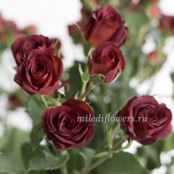 Роза кустовая Chococcino