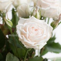 Роза кустовая Exclusive Sensation