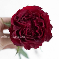 Роза пионовидная Heart