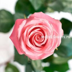 Роза Классическая Hermosa