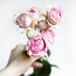 Роза кустовая пионовидная Lace Pink