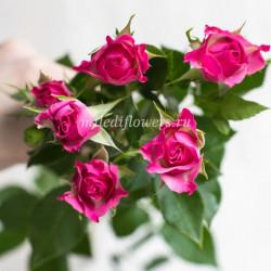 Роза кустовая Liane