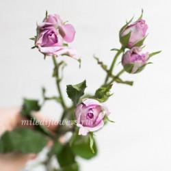 Роза кустовая Ocean Mikado