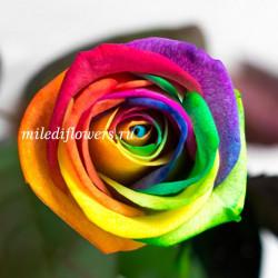 Роза Классическая Vendela Rainbow