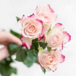 Роза кустовая Reflex
