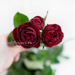 Роза кустовая Ruby