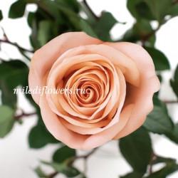 Роза Классическая Tiffany