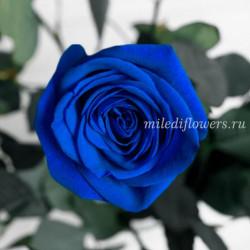 Роза Классическая Vendela Blue