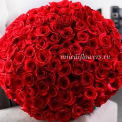 Букет 101 красная роза Фридом (Эквадор 40 см)