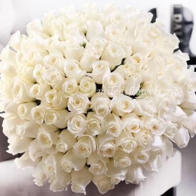 Букет из белых эквадорских роз (101 шт)