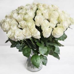 Монобукет из 51 белой розы
