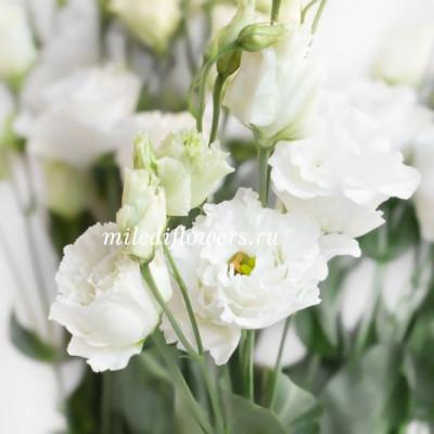Лизиантус Celebrich White