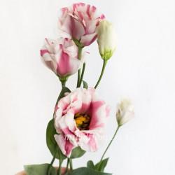 Лизиантус Fleur Elisa Pink