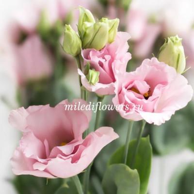 Лизиантус Korezo Light Pink