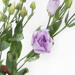 Лизиантус Rosita Lavender