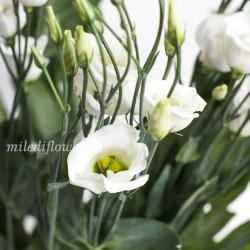 Лизиантус Piccolo White