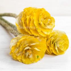 Брассика Yellow