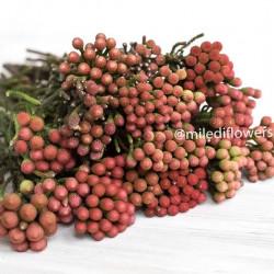 Бруния Red