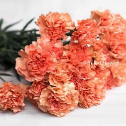Гвоздика Hermes Orange