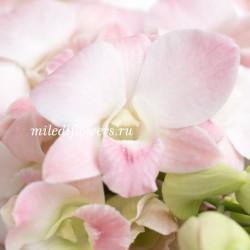 Орхидея Dendrobium Pink