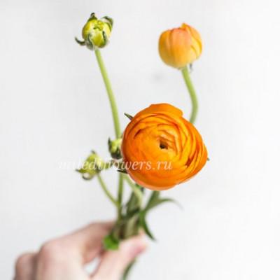 Ранункулюс Elegance Orange