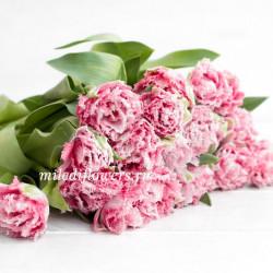 Тюльпан Crispion Love