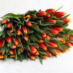 Тюльпан Henny van der Most