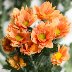 Хризантема Grand Orange